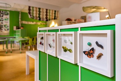 Small animal figures such as butterflies, frogs and many more in the Darwin room